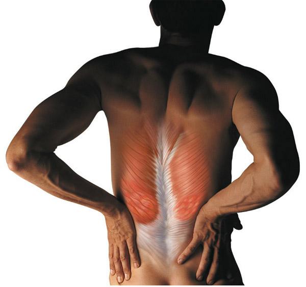 Мышцы позвоночника